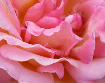 Pink Ripples Rose botanical photography 8x10 matte print