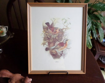 Lovely Vintage Fieldfare-Thrush Birds/Wildlife Wall Hanging Picture Frame-Decoration-Framed in Dearborn Michigan
