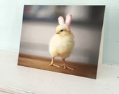 Note Card Chicken in Rabbit Easter Bunny Ears Easter Chicks in hats Baby Animals Stationary
