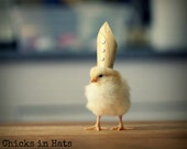Chicks in Hats Chicken in A Papal Pope Hat Rigid Refrigerator Magnet