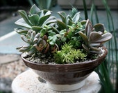 Palm Springs Inspired Succulent and Cactus Planted in Mid Century Style Pot