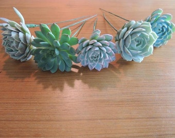 12 Wired succulents