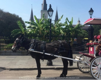 New Orleans French Quarter Carriage Photograph