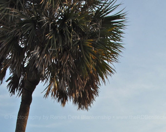 Palm Tree on the Beach Photograph