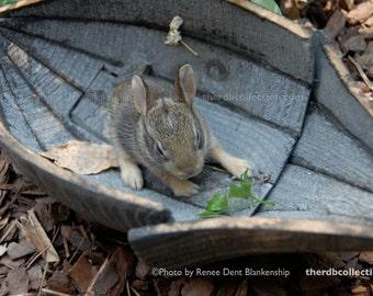 Bunny in Pod Photograph