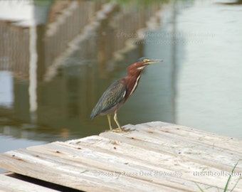 Enchanting Observer Photo - Gulf Bird