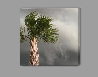 Palm Against the Storm - Gulf Coast - Renee Dent Blankenship - theRDBcollection