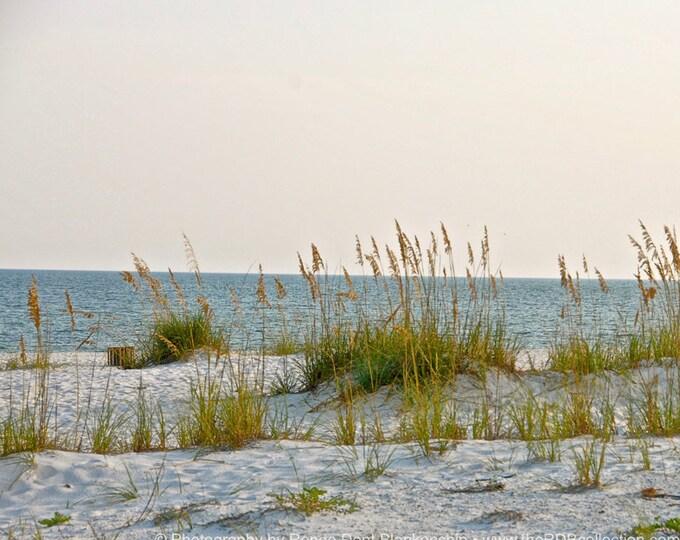 Sea Oats Along the Beach Photo