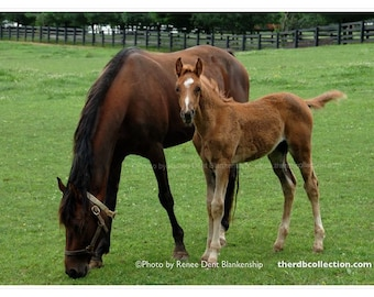 Colt & Mare Photo - Horses in Pasture Print - Nature Photography - theRDBcollection - Renee Dent Blankenship