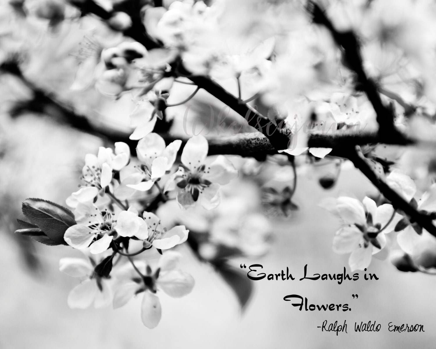 Earth Laughs In Flowers Ralph Waldo Emerson Quote Fine Art Etsy