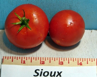 Sioux Tomato Heirloom Garden Seed 30+ Seeds Naturally Grown Open Pollinated Gardening