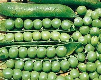 Wando English Shell Pea Seeds Non-GMO 75+ Seeds Tolerates Heat Naturally Grown Open Pollinated Heirloom Gardening