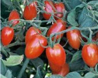 Elfin Tomato Heirloom Garden Seed Naturally Grown Open Pollinated 30+ seeds Gardening
