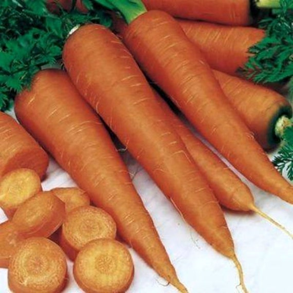 Danvers 126 Carrot Seeds Non GMO-Open Pollinated-Organic. 250