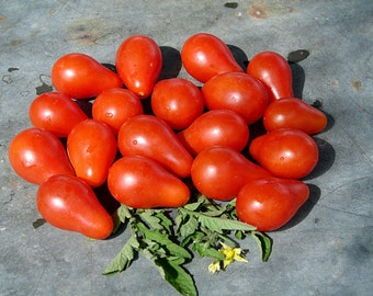Red Pear  Tomato Heirloom Garden Seed  Non-GMO Naturally Grown Open Pollinated 30+ seeds Gardening