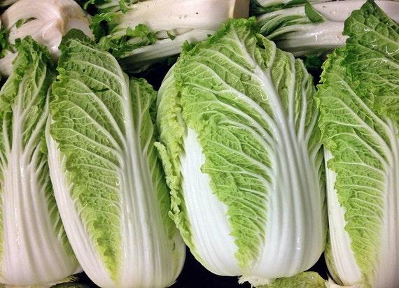 MICHIHILI NAPA CABBAGE Chinese Vegetable Bok Choy Seeds