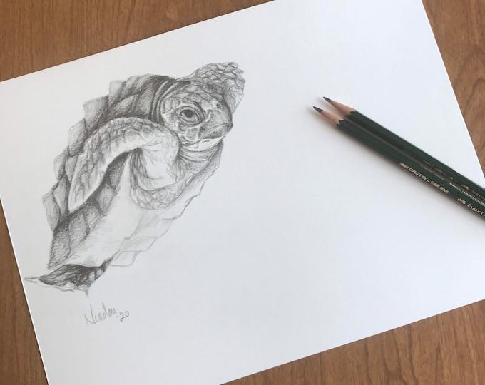 Original pencil drawing Nicolae Art animal artist Nicole Smith turtle sketch 9x12