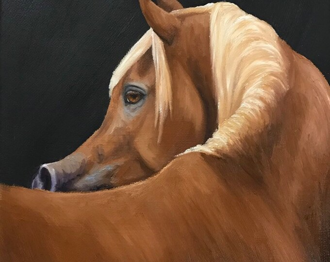 Original oil painting Arabian horse art Nicolae Equine Art Arabian Nicole Smith Artist 8x10 stallion