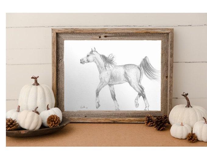 Orignial Arabian horse artwork graphite pencil sketch 11x14 Nicolae Art Equine Artist