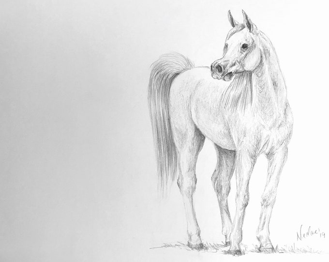 "Orignial horse pencil drawing by equine artist Nicole Smith Arabian art graphite sketch ""calling all ladies"" size 8x10"