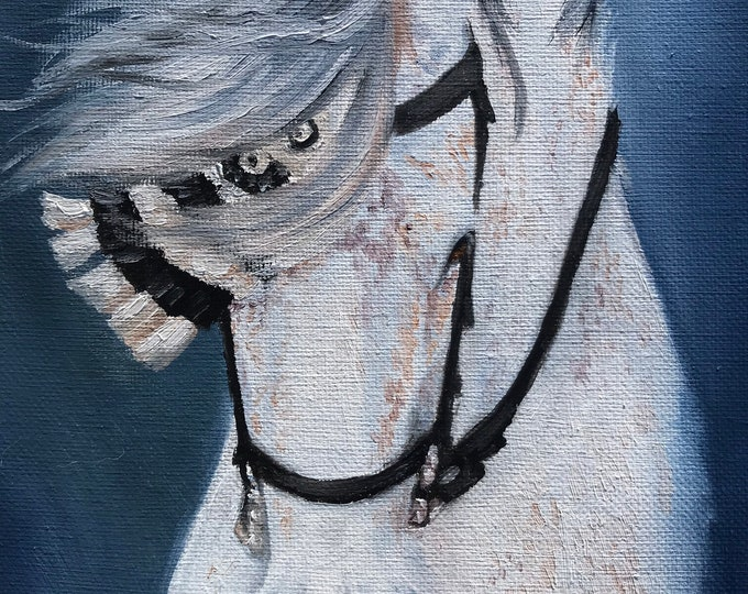 Original Andalusian horse oil painting on canvas 8x10 by Nicole Smith