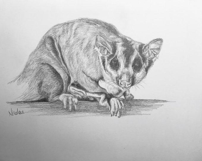 Original pencil drawing Nicolae Art animal artist Nicole Smith Australian sugar glider sketch 9x12