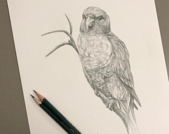 Original bird pencil drawing Nicolae Art artist Nicole Smith sketch 9x12