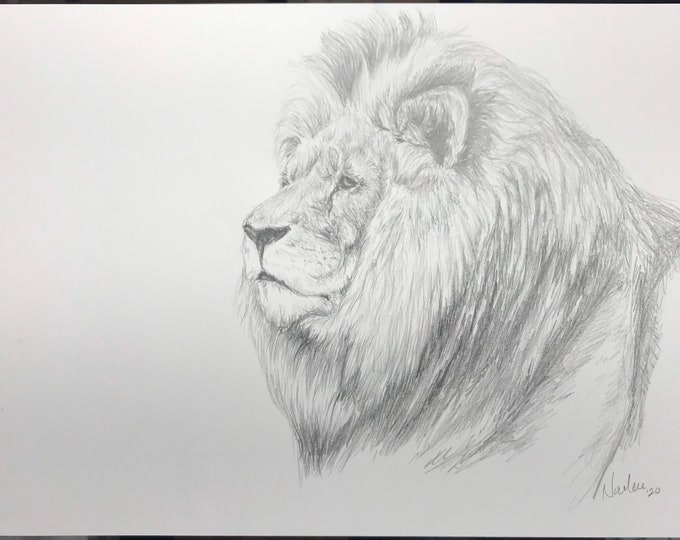 Original lion pencil drawing Nicolae Art animal artist Nicole Smith sketch 9x12