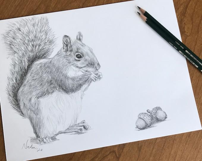 Original pencil drawing Nicolae Art animal artist Nicole Smith squirrel sketch 9x12