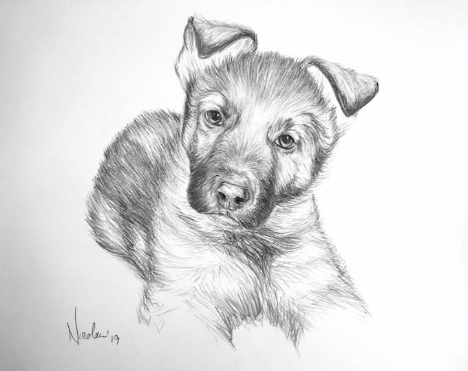 Original German Shepard puppy pencil drawing Nicolae Art pet artist Nicole Smith dog sketch 8x10