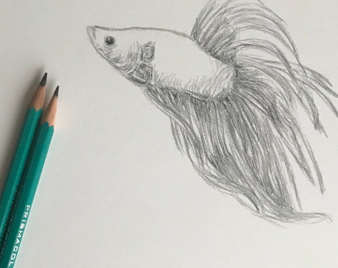 Original pencil drawing Nicolae Art animal artist Nicole Smith fish sketch 9x12