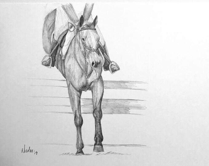 Orignial horse artwork graphite pencil sketch 8x10 showjumping equestrian