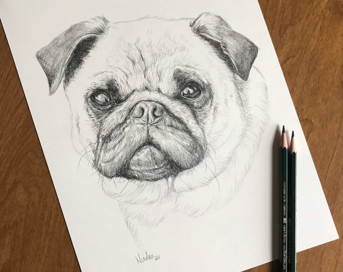 Original dog pencil drawing Nicolae Art animal artist Nicole Smith Pug sketch 9x12
