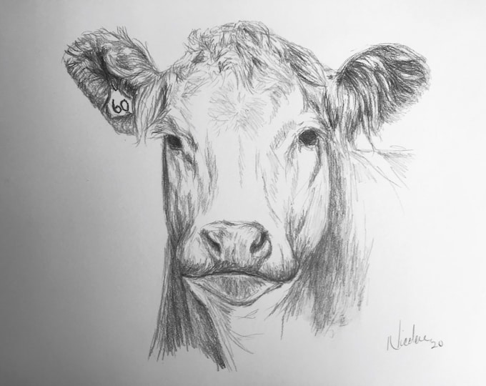 Original cow pencil drawing Nicolae Art pet artist Nicole Smith farm animal sketch 9x12