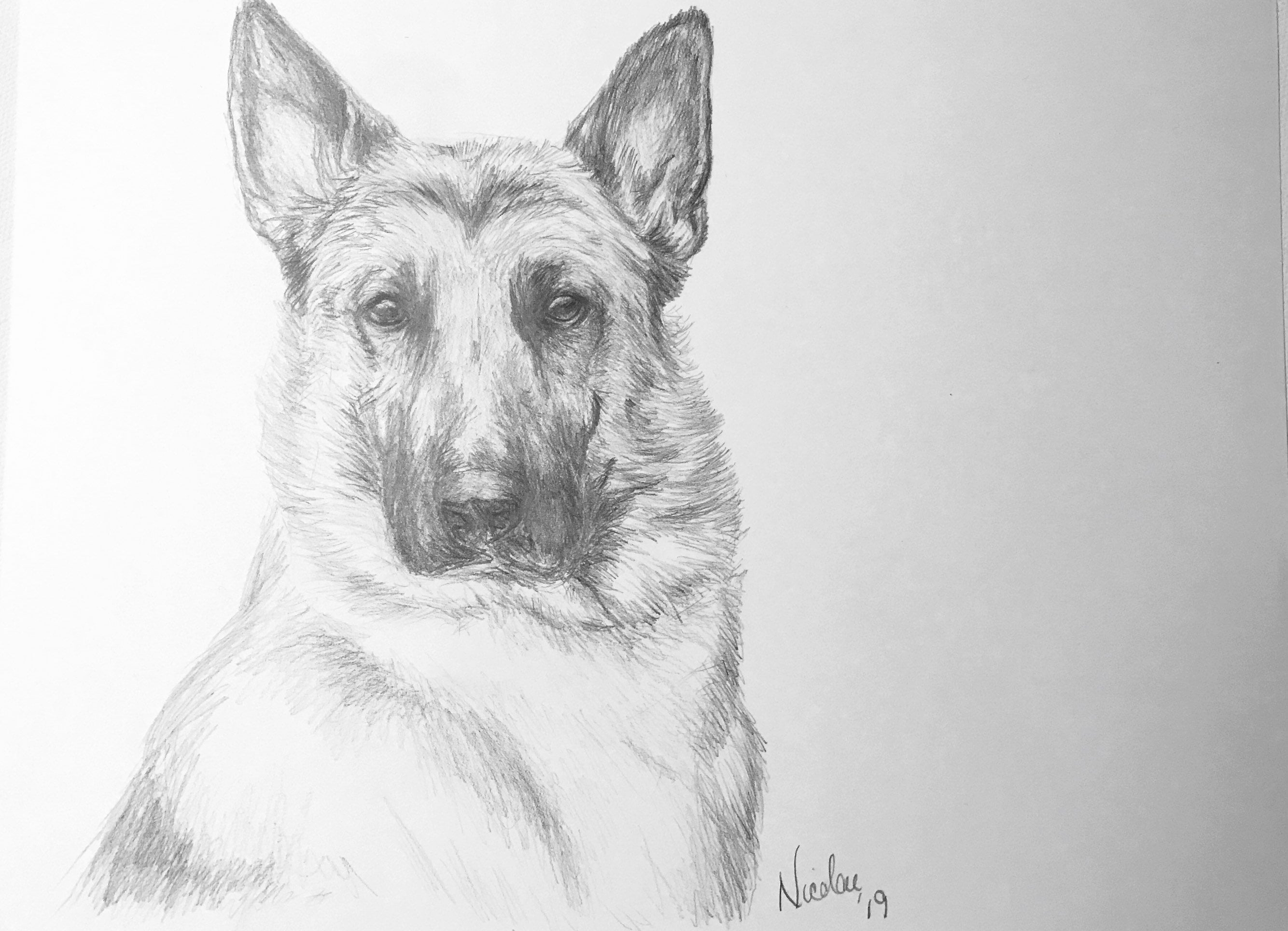 Original german shepard dog pencil drawing nicolae art pet artist