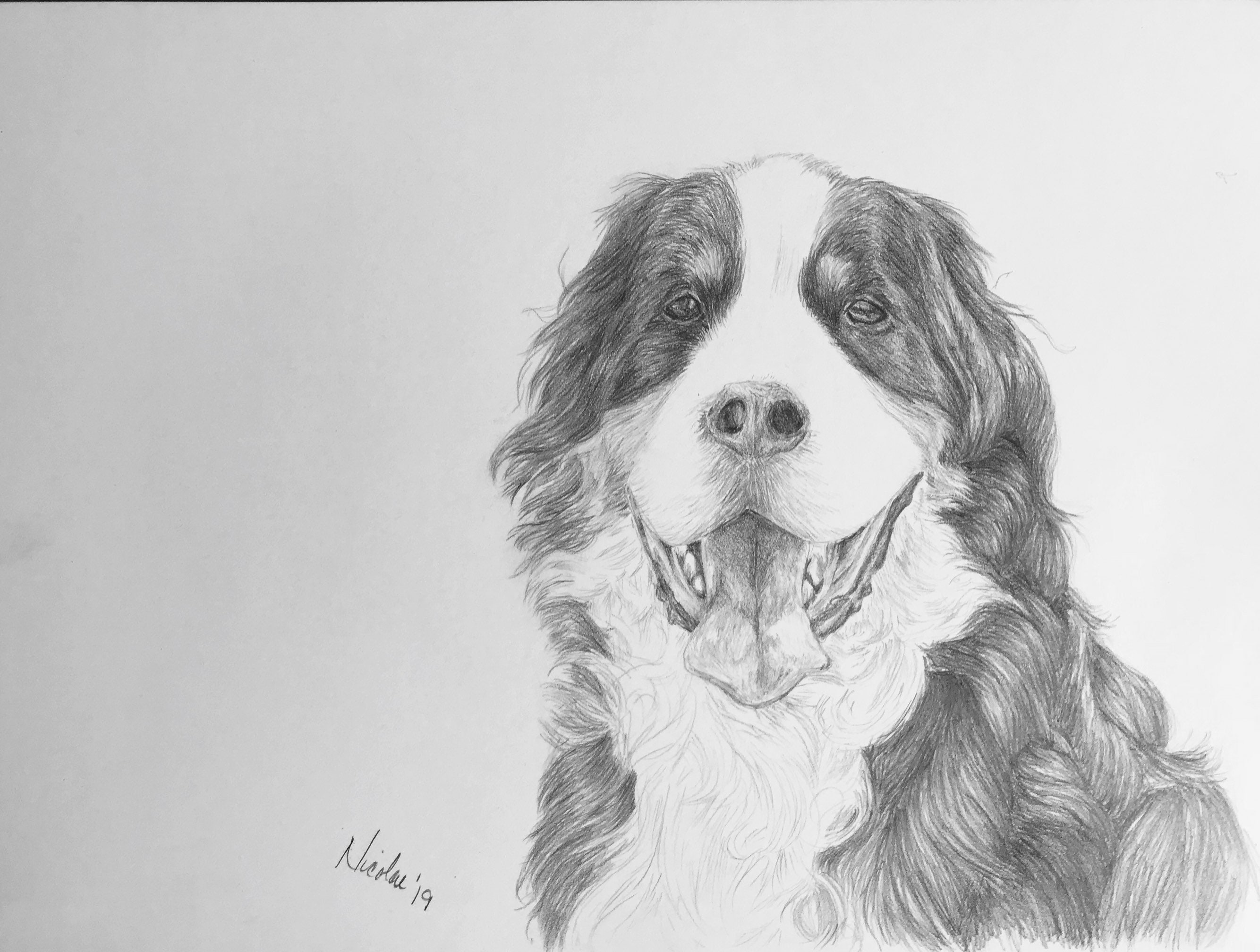 Original dog pencil drawing nicolae art pet artist nicole smith