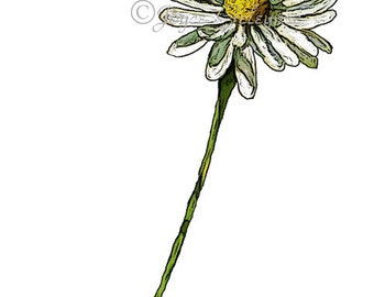 Daisy Clip Art Hand Drawn Clipart, Drawing of Daisy Flower, Flower Clipart, Daisy Petals, Instant Download, Commercial Use