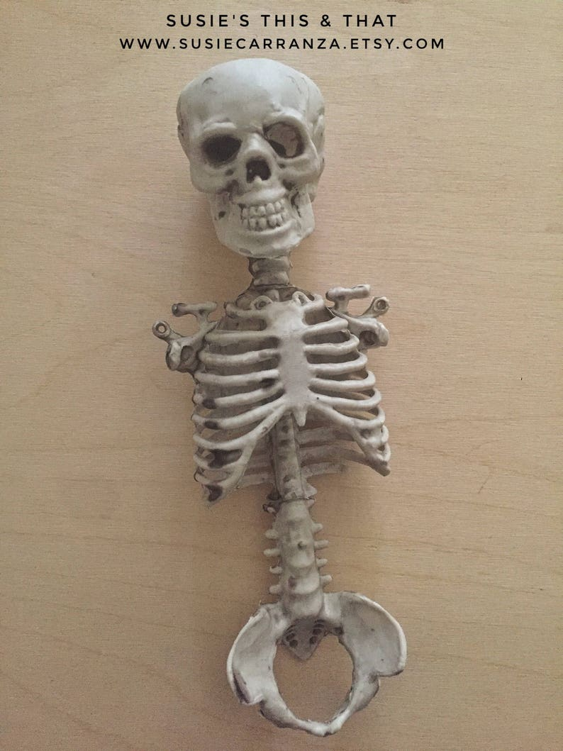 pieces Spooky decor. 8 Bag of Bones perfect for Halloween party decor Eight