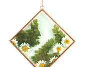 """4"""" x 4"""" Diamond Copper Glass Pressed White Daisies Wall Hanging"""