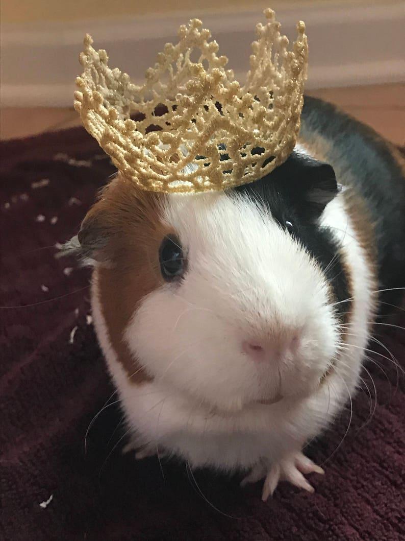 Pet Birthday Crown Gold Accessories Dog