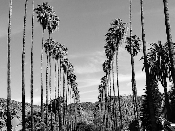 Palm Trees In Los Angeles California Black And White Palm Etsy