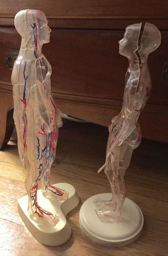 1960 The Visible Woman Visible Man Anatomy Model Vintage Etsy