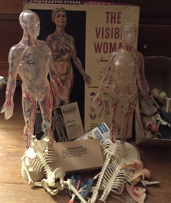 1960 The Visible Woman & Visible Man Anatomy Model Vintage