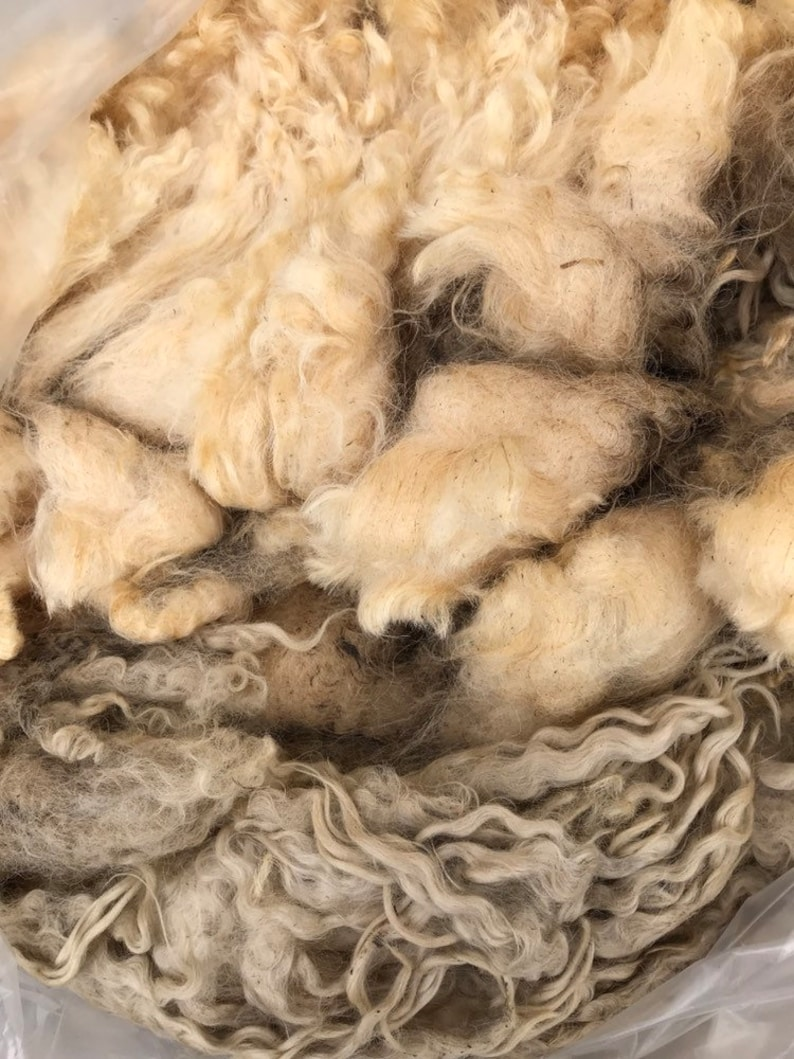 Teeswater fleece #4067