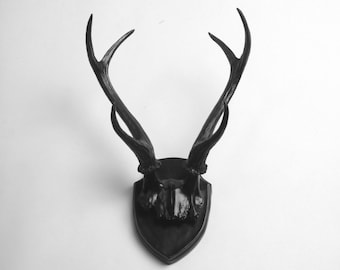 X-LARGE Faux Deer Skull Antler Trophy w/Plaque in Black by White Faux Taxidermy  - Mounted Resin Deer Antler Decor