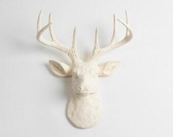 Antique White Mini Deer Head - The MINI Tobrin- Eggshell Resin Faux Deer Head- Stag Wall Decor by White Faux Taxidermy Animal Head Wall Art