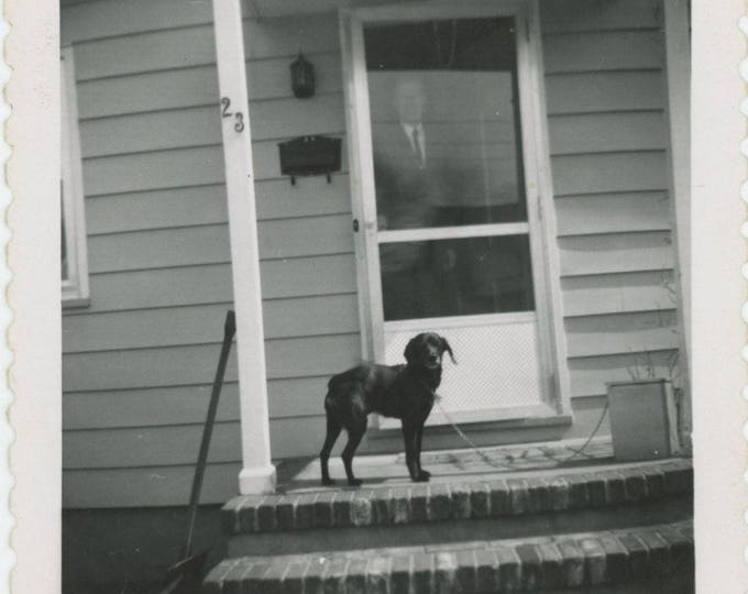 Vintage Snapshot Photo: Chained Dog, Man at Storm Door, Number 23, c1950s  (81634)