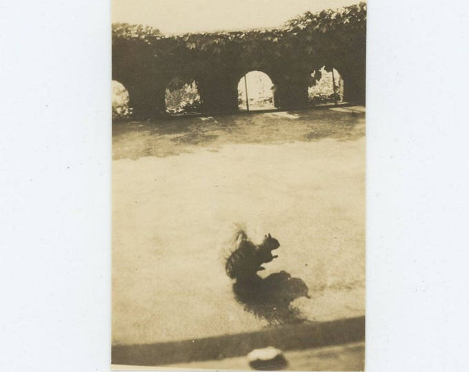 Vintage Snapshot Photo: Squirrel & Shadow, Early 1900s (73555)