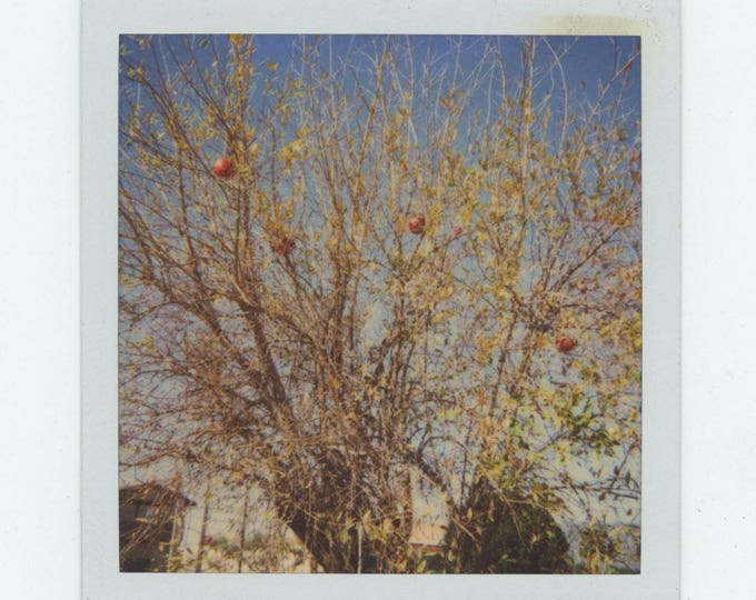 Vintage Polaroid SX-70 Snapshot Photo: Balls in Tree [82649]