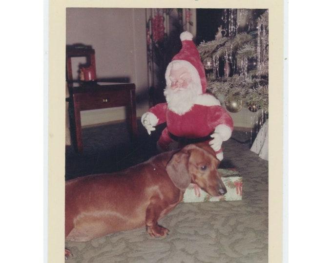 Vintage Snapshot Photo: Dachshund & Toy Santa, 1964/5 [812760]
